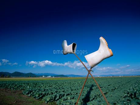 畑の写真素材 [FYI01964434]