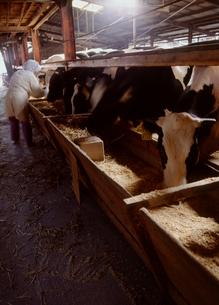 牛舎で働く女性の写真素材 [FYI01964564]