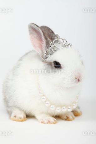 ティアラをつけて伏せるミニウサギの写真素材 [FYI01964985]