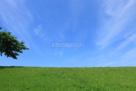 青空と新緑の土手の写真素材 [FYI01965284]