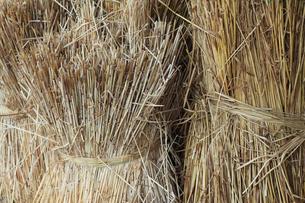 刈り取った麦の束の写真素材 [FYI01966454]