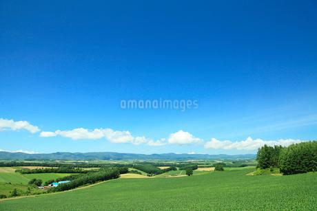 田園風景と青空 美瑛の写真素材 [FYI01968544]