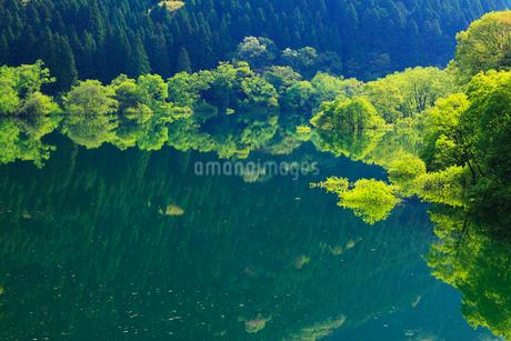 新緑と犬上ダム湖の写真素材 [FYI01968836]