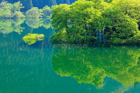 新緑と犬上ダム湖の写真素材 [FYI01969600]