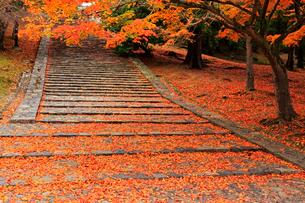 奈良公園の階段 奈良県の写真素材 [FYI01969640]