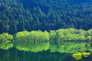新緑と犬上ダム湖の写真素材 [FYI01970007]