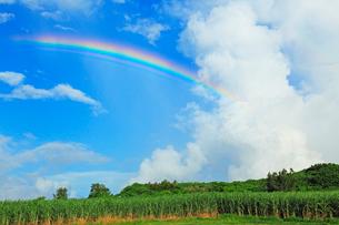 サトウキビ畑と虹 宮古島の写真素材 [FYI01970150]