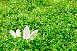 草原に置かれたうさぎの耳の飾りの写真素材 [FYI01970666]
