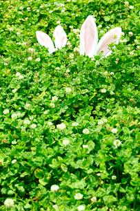 草原に置かれたうさぎの耳の飾りの写真素材 [FYI01970736]