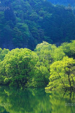 新緑と犬上ダム湖の写真素材 [FYI01970858]