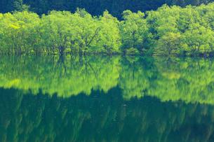新緑と犬上ダム湖の写真素材 [FYI01971517]