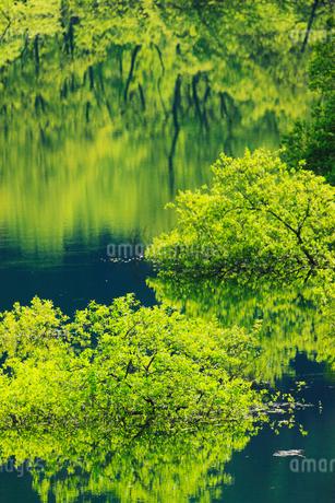 新緑と犬上ダム湖の写真素材 [FYI01971745]