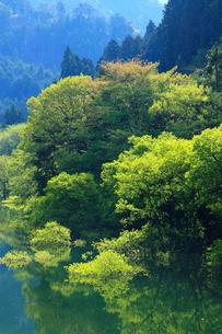 新緑と犬上ダム湖の写真素材 [FYI01971763]