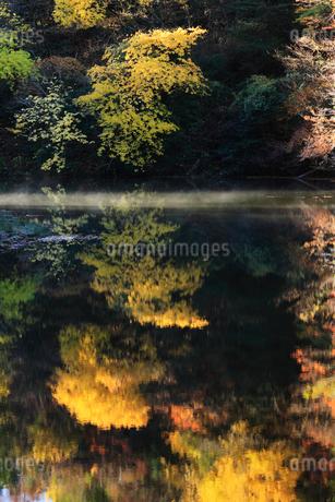 紅葉した木々と池 滋賀県の写真素材 [FYI01972867]