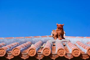 屋根の上のシーサー 沖縄県の写真素材 [FYI01975084]