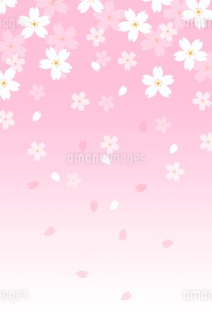 桜の花と花びら CGの写真素材 [FYI01975648]