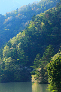 新緑の永源寺ダム 滋賀県の写真素材 [FYI01975830]