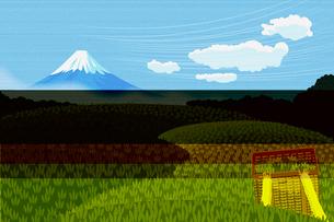 茶畑と富士山 イラストのイラスト素材 [FYI01977091]