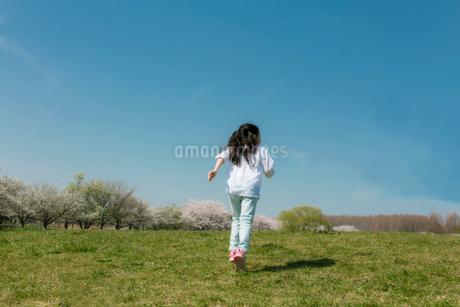 春の公園を走る女の子の後ろ姿の写真素材 [FYI01977265]