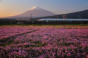 蓮華の花と新幹線と富士山の写真素材 [FYI01978239]