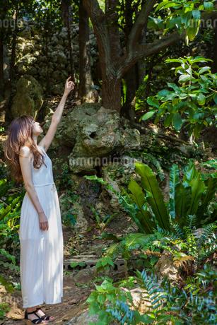 森の中で上を見上げる女性の写真素材 [FYI01978455]