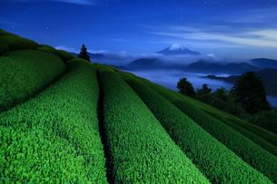 夜の茶畑と富士山の写真素材 [FYI01979933]