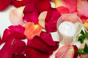 Burning candle and rose petalsの写真素材 [FYI01979952]