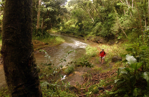 Man hiking along forest streamの写真素材 [FYI01980111]