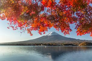 河口湖の紅葉と富士山の写真素材 [FYI01980129]