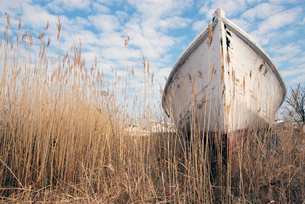 Dilapidated boat in weedsの写真素材 [FYI01980211]