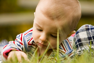 Curious baby in grassの写真素材 [FYI01980224]