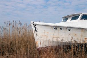 Dilapidated boat in weedsの写真素材 [FYI01980660]
