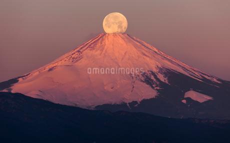 早朝の富士山頂と満月 パール富士の写真素材 [FYI01980858]