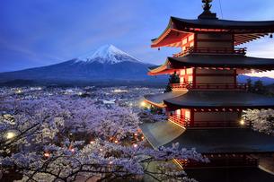 新倉山浅間公園より望む桜と五重塔と富士山の夜景の写真素材 [FYI01980861]