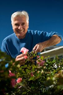 Senior man gardeningの写真素材 [FYI01985007]