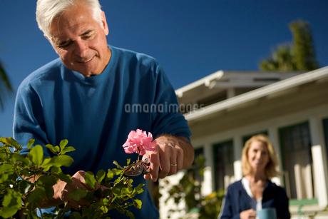 Senior couple gardeningの写真素材 [FYI01985195]