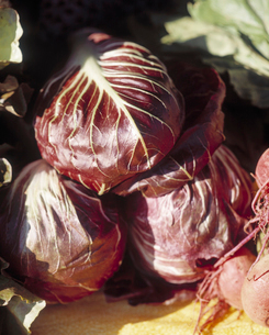 Red cabbage headsの写真素材 [FYI01985235]