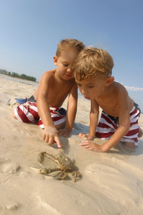 Young boys pointing at crab on beachの写真素材 [FYI01986321]