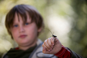 Boy holding insect on his handの写真素材 [FYI01986449]