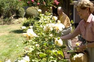 Couple gardeningの写真素材 [FYI01987006]