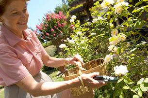 Woman gardeningの写真素材 [FYI01987103]