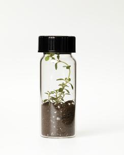 Seedling growing in laboratory glasswareの写真素材 [FYI01987591]