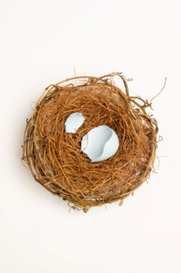 Bird's nest with empty eggshellの写真素材 [FYI01989490]