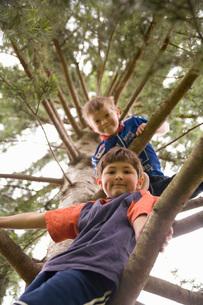 Boys climbing treeの写真素材 [FYI01989786]