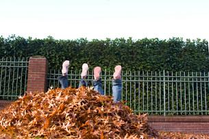 Children falling into leaf pileの写真素材 [FYI01990435]
