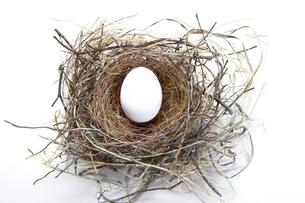 Studio shot of bird's nest with eggの写真素材 [FYI01990811]