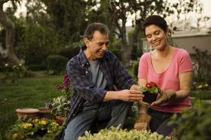 Mature couple gardening togetherの写真素材 [FYI01991348]