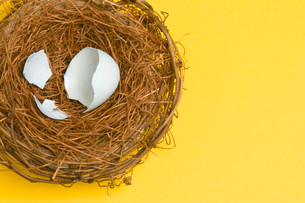 Bird's nest with empty eggshellの写真素材 [FYI01991379]