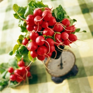 Bunch of radishes on scaleの写真素材 [FYI01991381]