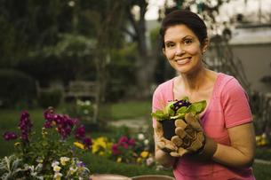 Mature woman gardeningの写真素材 [FYI01991856]